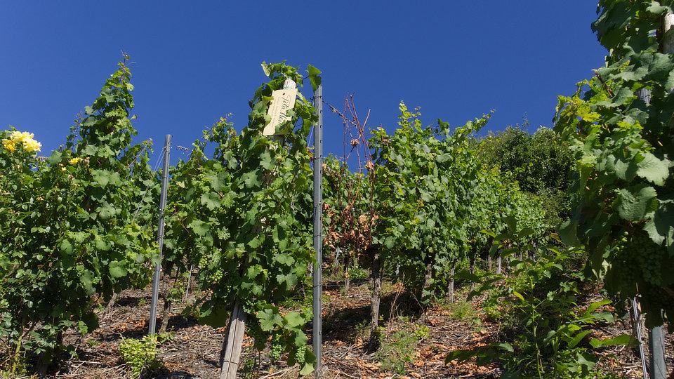 Ausbildung Winzer, Weinbauer, Weintechnologe