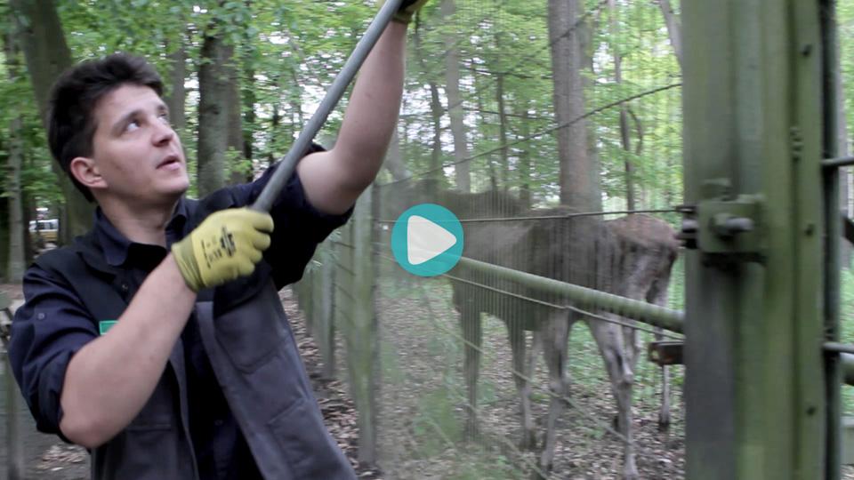 Video Ausbildung Tierpfleger Fachrichtung Zoo Wildpark Schwarze Berge GmbH & Co. KG