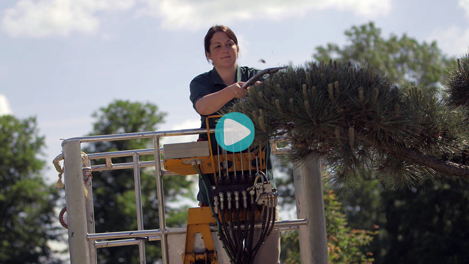 Video Ausbildung Gärtner Baumschule