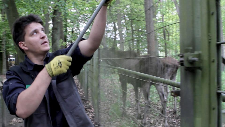 Ausbildung zum Tierpfleger Fachrichtung Zoo